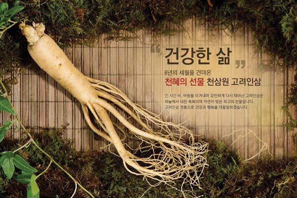 Cách phân biệt Nhân Sâm Hàn quốc